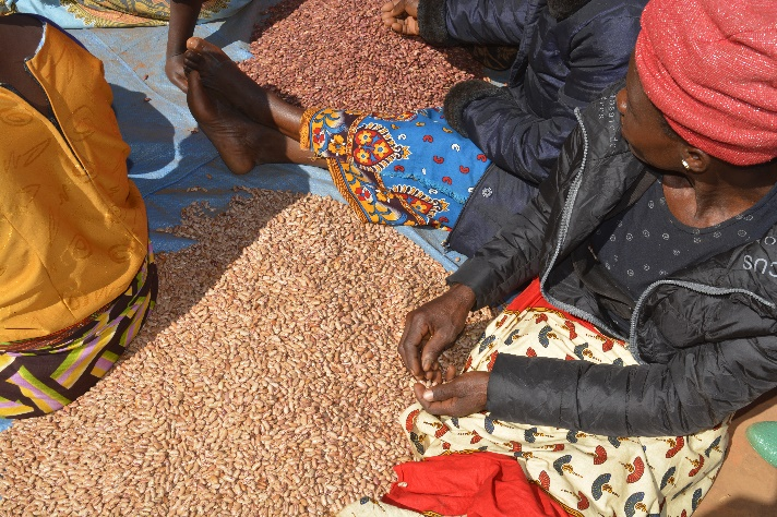 Women grading and sorting beans